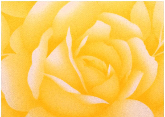 Lampshade Yellow Roses